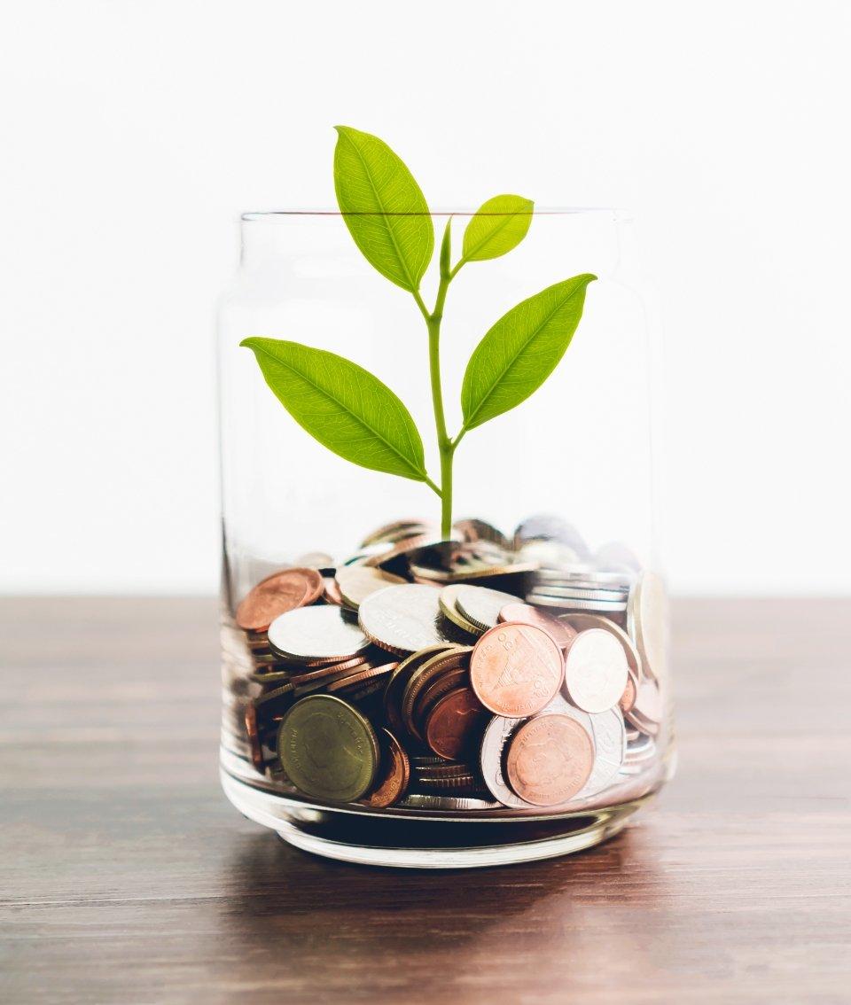 Pflanze im Glas mit Münzen